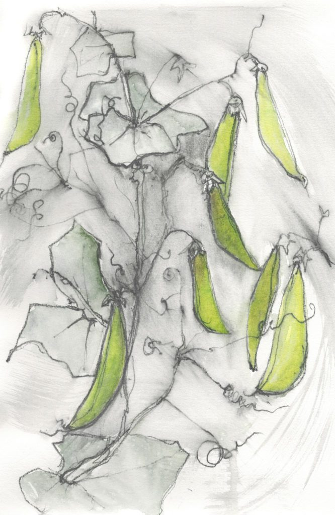 Peas by Kate Pettitt